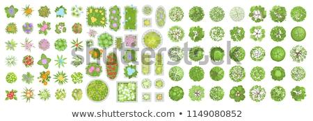 conjunto · diferente · árvore · projeto · ilustração · abstrato - foto stock © colematt