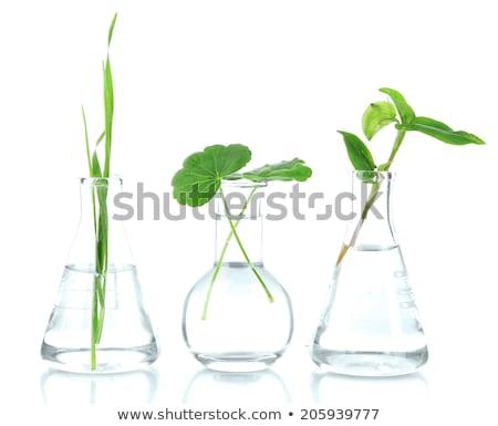 Növekvő növény laboratórium tartalom vonzó érett nő Stock fotó © pressmaster