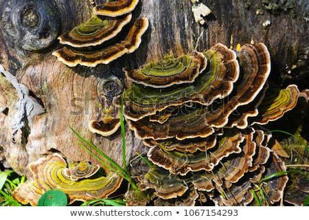 Gomba moha természetes organikus növények növekvő Stock fotó © romvo