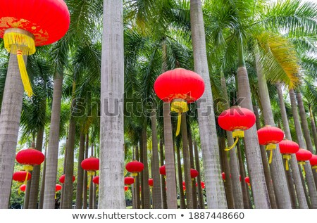 green japanese lantern hanging from a palm tree Stock photo © 808isgreat