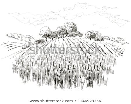 старом доме области пшеницы дома природы стране Сток-фото © clearviewstock