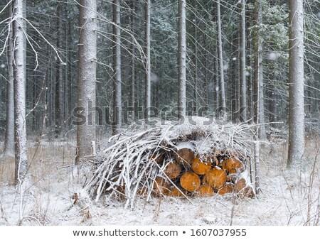 Kış görüntü orman kar arka plan ağaçlar Stok fotoğraf © Kirschner