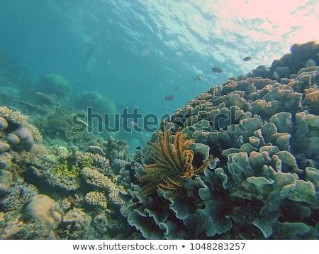 Plongée port plongeur phare vieux français Photo stock © hraska