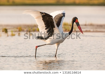 большой · птица · болото · Постоянный · искусственный · деревья - Сток-фото © dirkr
