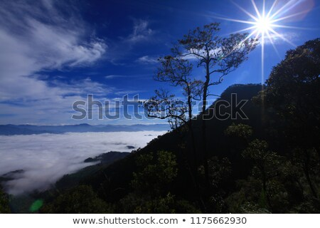 distant mountains rise above the wild forest Stock photo © oei1