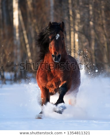 Bay horse in winter Stock photo © castenoid