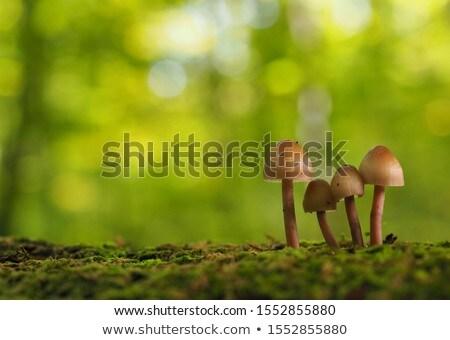 гриб · макроса · продовольствие · обеда · осень - Сток-фото © AvHeertum