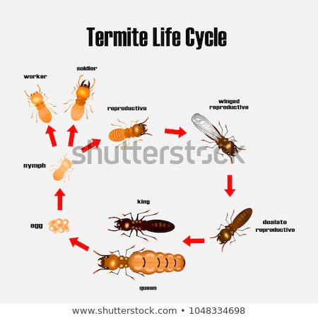 A termite life cycle Stock photo © bluering