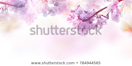 Branches over purple background Stock photo © simply
