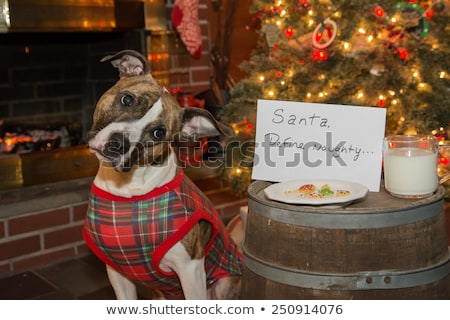 Christmas Cookie Crumbs by Note From Santa Tree and Fireplace Stock photo © saje
