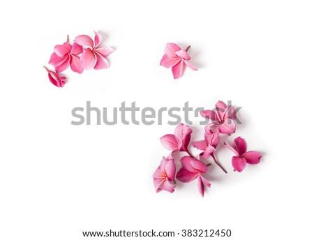 Plumeria flowers isolated on white Stock photo © Kheat