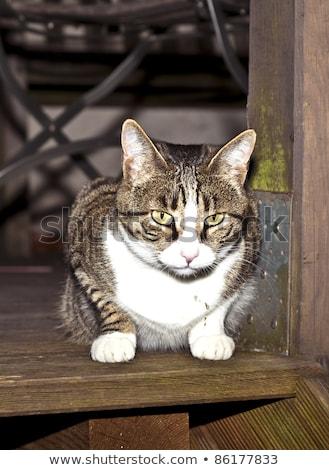 animal · de · estimação · gato · alimentação · fresco · grama · branco - foto stock © meinzahn