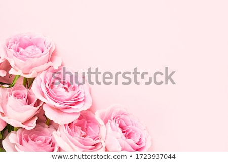 Rosa florescer deserto cacto verde cor Foto stock © emattil