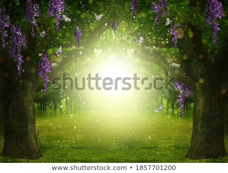 Sunrise light between the branches at spring stock photo © shihina