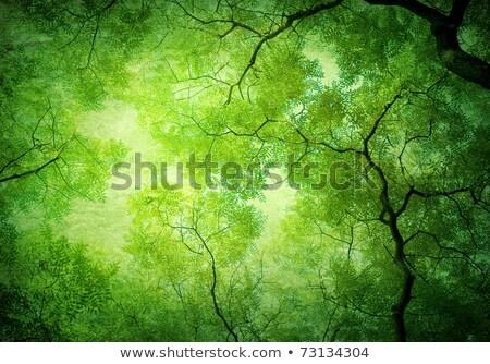 verde · interior · fundo · textura · parede · luz - foto stock © heliburcka