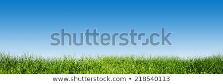 草 · 青空 · 空 · 背景 · 芸術 · 絵画 - ストックフォト © photocreo