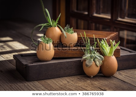 Message and egg shell Stock photo © Viva