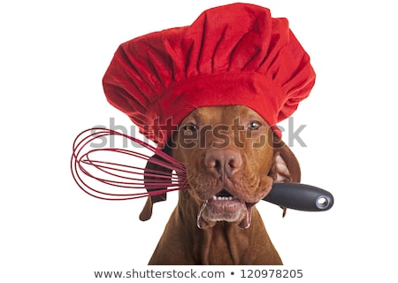 dog chef with egg beater Stock photo © Quasarphoto