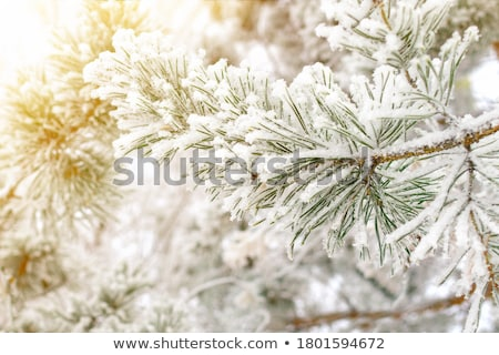 Kar ağaç orman manzara bahçe Stok fotoğraf © inoj