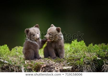 ヒグマ · 赤ちゃん · クマ · 森林 · 日没 - ストックフォト © adrenalina