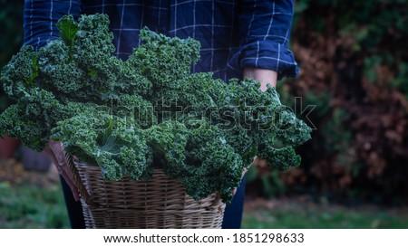 tanıtım · yeşil · salata · sepet · siyah - stok fotoğraf © Fotografiche