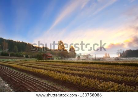 House in farmland landscape  Stock photo © bluering
