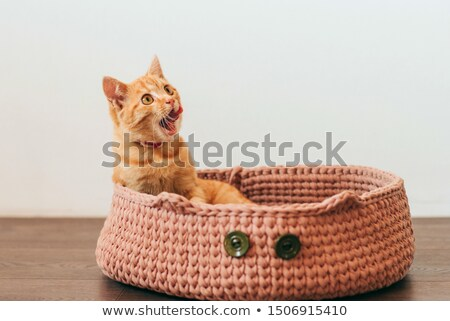 Cute ginger kitten licking its mouth - close up Stock photo © ilona75