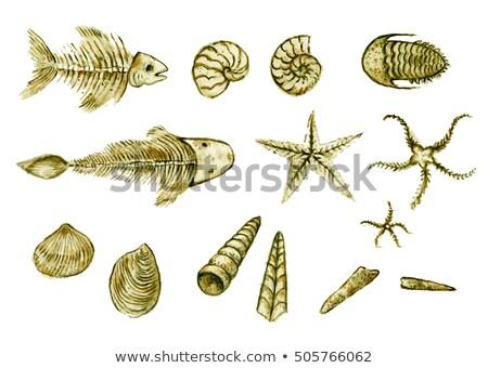 化石 · いい · 黒白 · 孤立した · 白 · 海 - ストックフォト © threeart