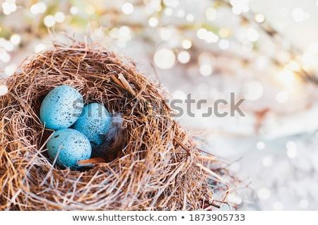Macro of European Robin Eggs in a Real Nest  Stock photo © StephanieFrey