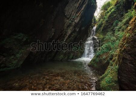 водопада озеро дерево лес саду горные Сток-фото © olira