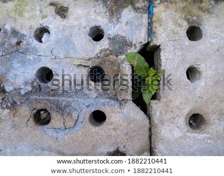 small tree in a crevice of wall Stock photo © njaj