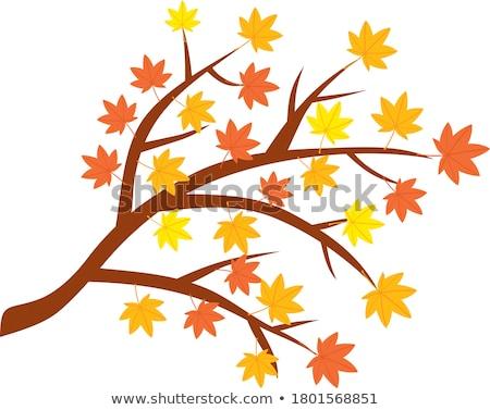 autumnal colored leaves maple stock photo © yoshiyayo