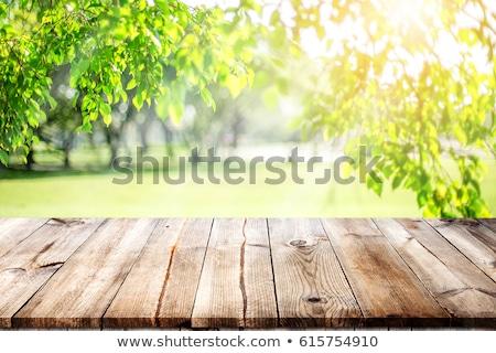 Picknicktafel weide voedsel natuur tuin groene Stockfoto © Nejron