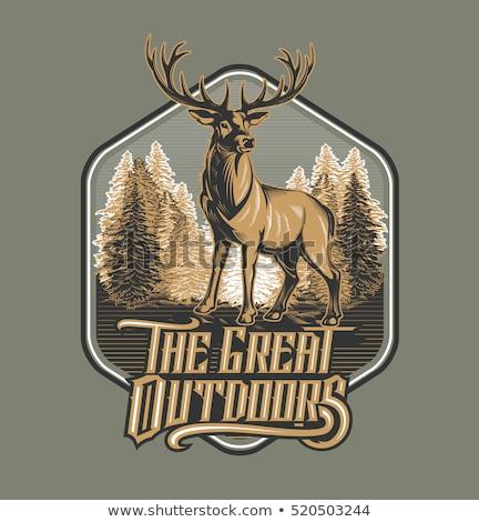 狩猟 エンブレム ヴィンテージ クロス 郡 鹿 ストックフォト © angelp