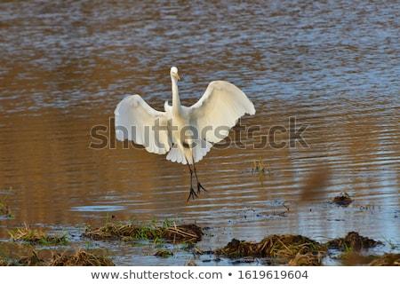 blanco · vuelo · agua · cielo · naturaleza · mar - foto stock © byrdyak