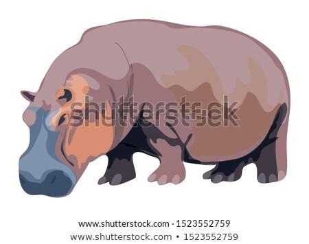 Hippopotamus amphibius Stock photo © raywoo