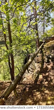 ponte · montagna · foresta · legno · vicino · acqua - foto d'archivio © rognar