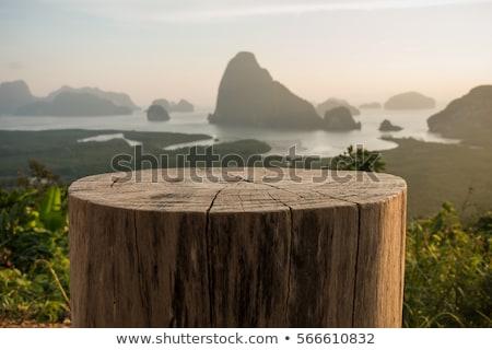Boom bomen illustratie hout achtergrond kunst Stockfoto © colematt