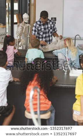 Front view of a teacher explaining at his pupils about human skeleton in classroom at school Stock photo © wavebreak_media