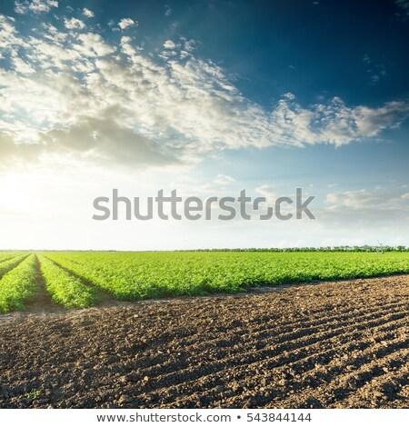 avond · licht · agrarisch · veld · foto · zon - stockfoto © oliverjw