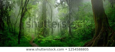 Fa moha mély vad erdő puha Stock fotó © aetb
