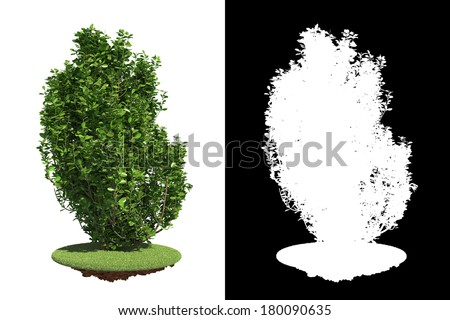 Green Shrub with Detail Raster Mask. Stock photo © tashatuvango