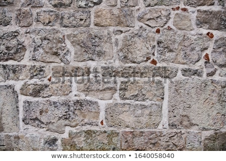 ストックフォト: 古い · 石の壁 · 苔 · 良い · ビジネス · 家
