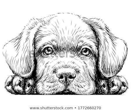 Nero cucciolo cute rosso ceramica cuore Foto d'archivio © vanessavr