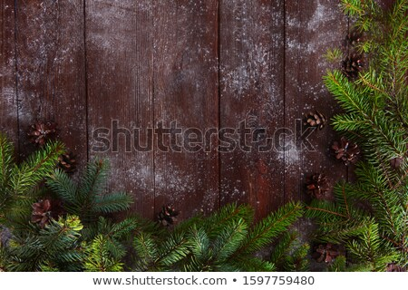 Green Prickly Branches with Bumps of Coniferous Tree Stock photo © Discovod