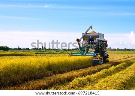 コメ 田 収穫 農村 日本 アジア ストックフォト © craig