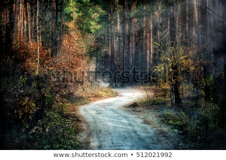 Toprak yol çam orman sis soğuk Stok fotoğraf © lovleah