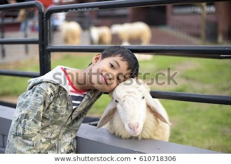 Chłopca grać baranka gospodarstwa szczęśliwy dziecko Zdjęcia stock © galitskaya