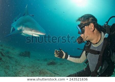 акула атаковать Diver Поп-арт рисунок воды Сток-фото © studiostoks