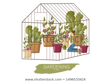 Woman working in the greenhouse Vector flat style. Growing plants and flowers. Cage garden concepts Stock photo © frimufilms